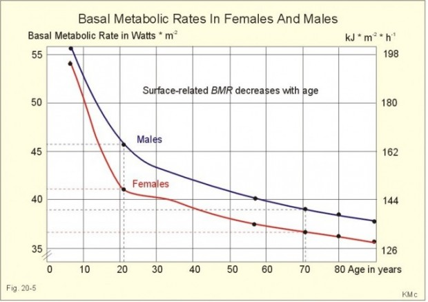 Basal-metabolic-rate-678x478